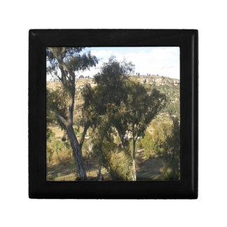 Bluegum Trees Gift Box