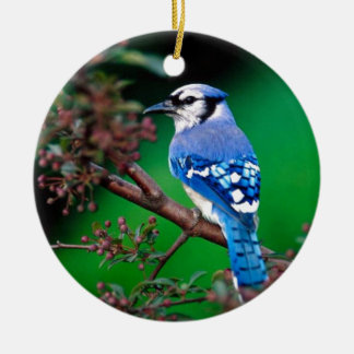 Bluejay Bird Ceramic Ornament