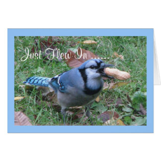 Bluejay Birthday Greetings Card