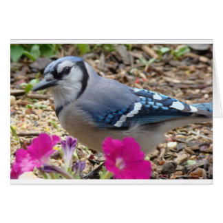 Bluejay Gift Ideas Card