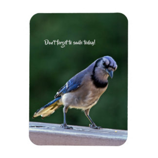 Bluejay Magnet-Don't forget to smile today! Magnet