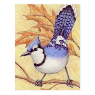 Bluejay postcard