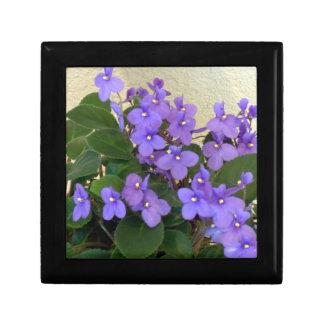 Bluest Blue Violets Gift Box
