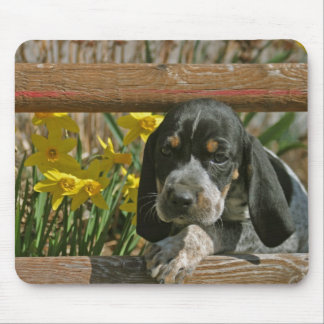 Bluetick puppy mouse pad