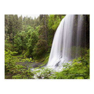 Blurred Waterfall and Forest View in Oregon Postcard
