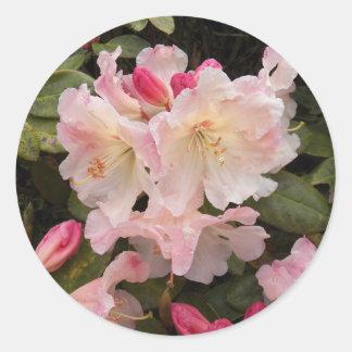 Blush Pink Rhododendrons Floral Round Sticker