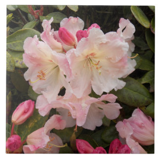 Blush Pink Rhododendrons Floral Tile
