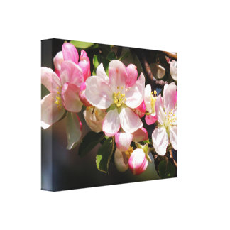 Blush Pink Spring Flowers Canvas