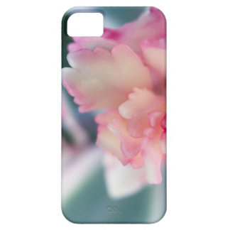 BlushedPink iPhone 5 Covers