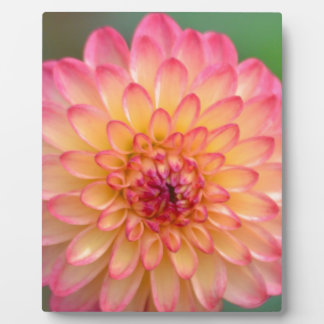 Blushing Beauty Plaque