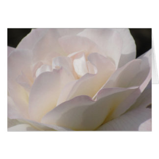 Blushing White Rose Card