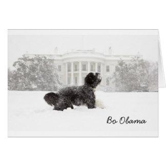 Bo Obama in the Snow Card