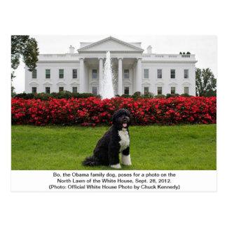 Bo- The Obama Family dog Postcard