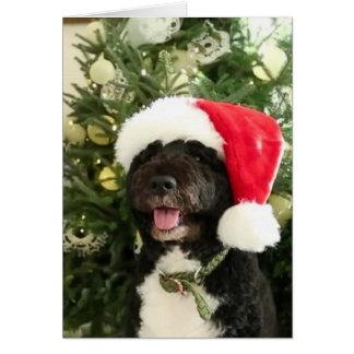 Bo waiting for Santa - Greeting Card