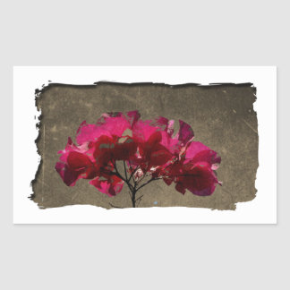 BOAN Bougainvillea Antique Sticker