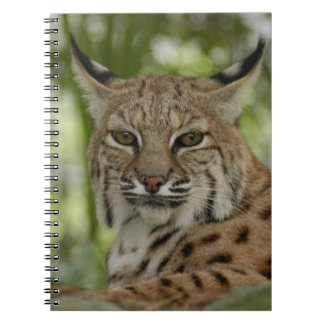 Bobcat 2 notebooks