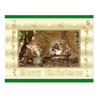 Bobcat Christmas Postcard