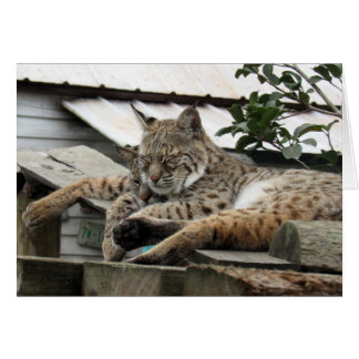 Bobcat Friends Birthday Card