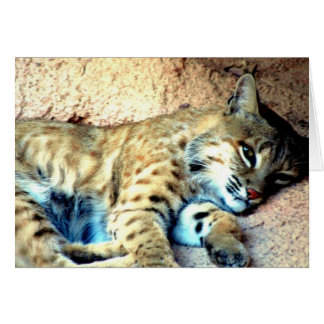 Bobcat Habitat Greeting Card