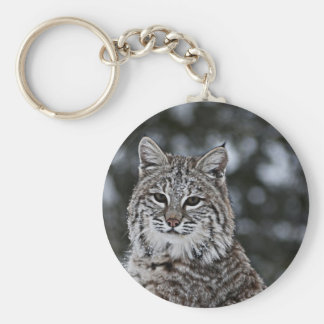 Bobcat in the Snow Basic Round Button Keychain