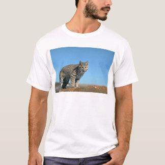 Bobcat skylined, eye contact T-Shirt