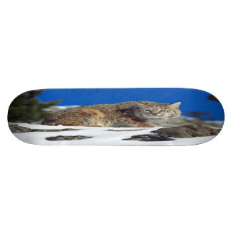 Bobcat Stare Skateboard