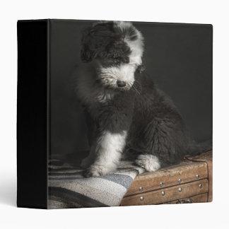 Bobtail puppy portrait in studio 3 ring binders