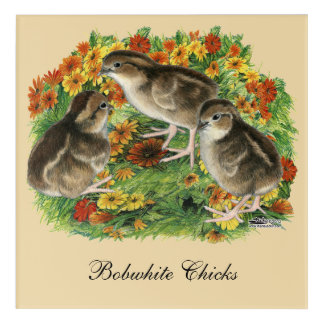 Bobwhite Garden Chicks Acrylic Wall Art
