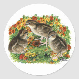 Bobwhite Garden Chicks Classic Round Sticker