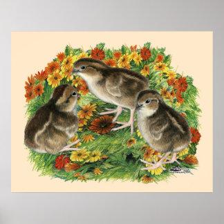 Bobwhite Garden Chicks Poster