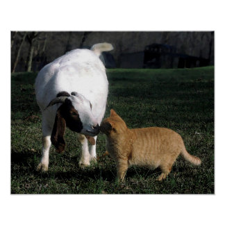 Boer Goat And Cat Portrait Poster Print
