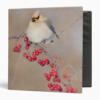 Bohemian waxwing in winter, Canada 3 Ring Binder