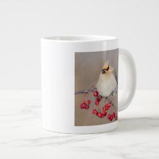 Bohemian waxwing in winter, Canada Large Coffee Mug