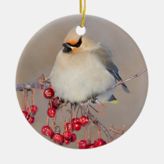 Bohemian waxwing in winter, Canada Round Ceramic Ornament