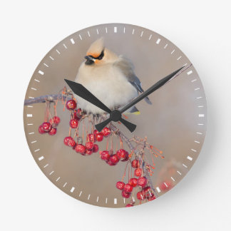 Bohemian waxwing in winter, Canada Round Clock