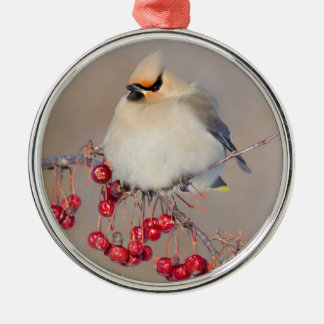Bohemian waxwing in winter, Canada Silver-Colored Round Ornament