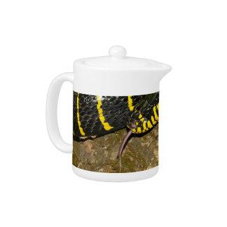 Boiga dendrophila or mangrove snake