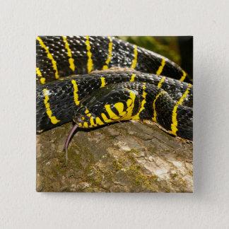 Boiga dendrophila or mangrove snake 2 inch square button