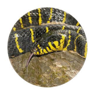 Boiga dendrophila or mangrove snake cutting board