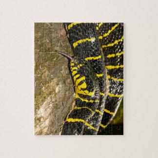 Boiga dendrophila or mangrove snake jigsaw puzzle