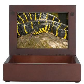 Boiga dendrophila or mangrove snake keepsake box