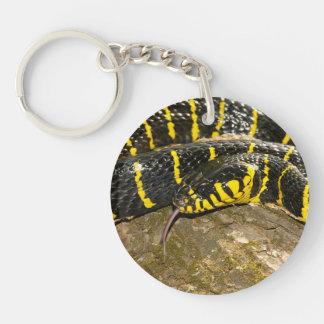 Boiga dendrophila or mangrove snake keychain