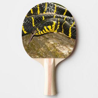 Boiga dendrophila or mangrove snake ping pong paddle