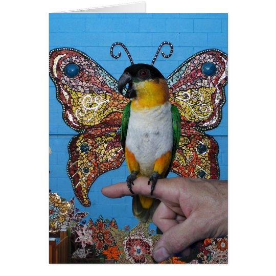 Boingo butterfly card 2