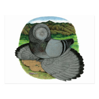 Bokhara Trumpeter:  Blue Postcard