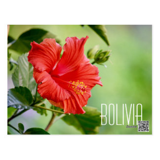 Bolivia hibiscus flower postcard