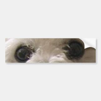 Bolognese eyes.png bumper sticker