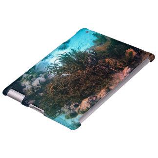 Bonairean Reef