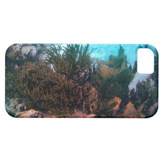 Bonairean Reef iPhone 5 Case