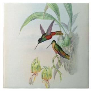 Bonaparte's Star Fronted Hummingbird (coloured lit Tile